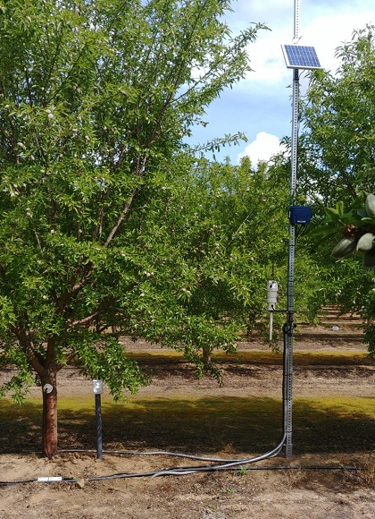 Saturas sensors in California orchard