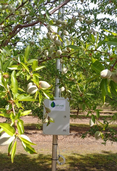 Saturas sensors in California almond orchard