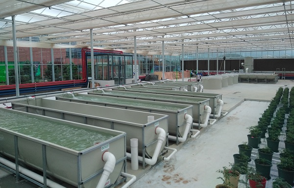 BioFishency installation! Now under construction as part of the China-Israel Agriculture and Technology Town, Shijiazhuang, China, the BioFishency systems will be used to hatch and grow ornamental koi and Chinese perch.
