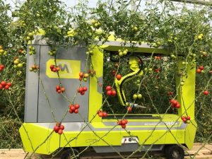 Alpha version of MetoMotion's Greenhouse RObotic Worker (GRoW) harvesting tomatoes in a greenhouse in Israel.
