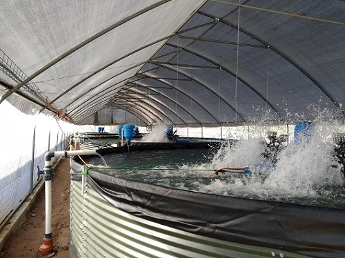 BioFishency installation of RAS for tilapia in Nigeria